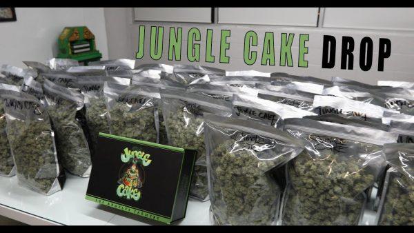 Jungle cake Jungleboys