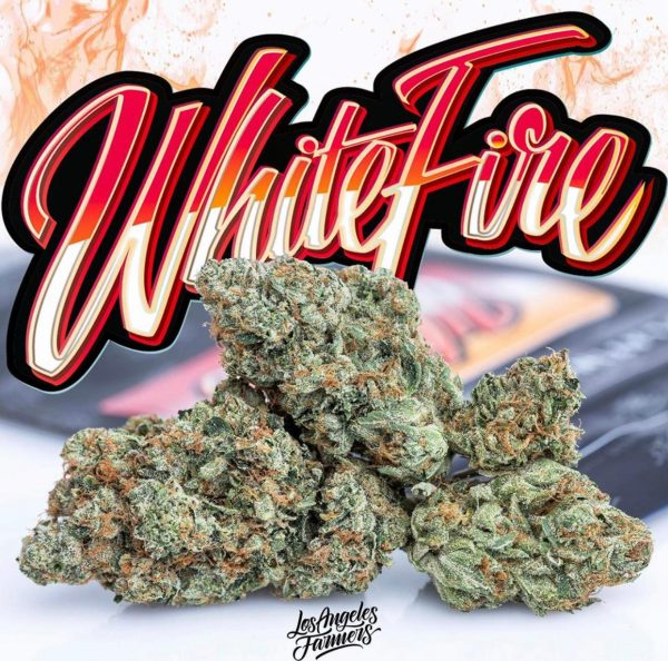White fire Jungleboys
