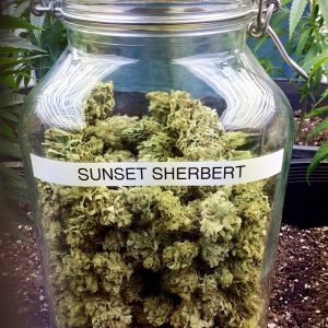 Sunset Sherbert
